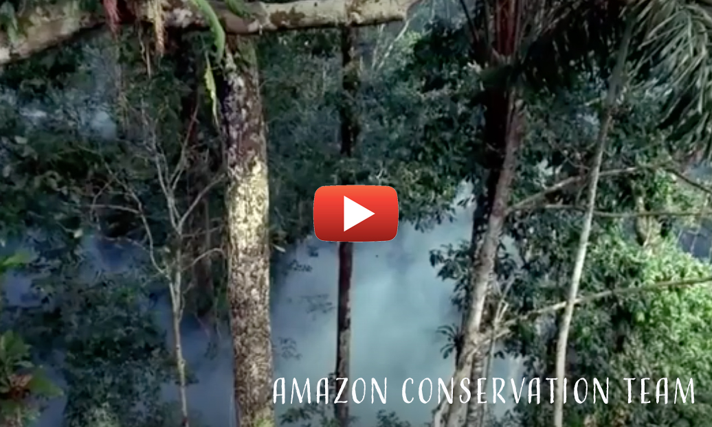 Watch the Video for the Amazon Conservation Team